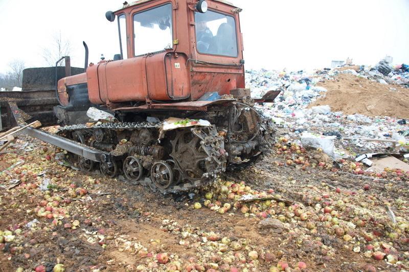 Наполигоне вСмоленской области уничтожили неменее 23 тонн яблок