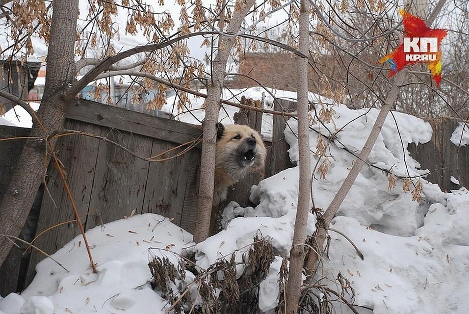ВКрасноярском крае собачка укусила ребёнка залицо