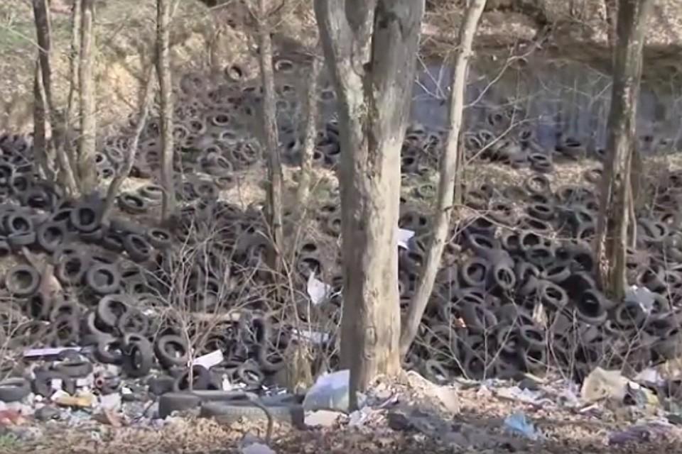 Взаповеднике «Татарское городище» устроили кладбище покрышек