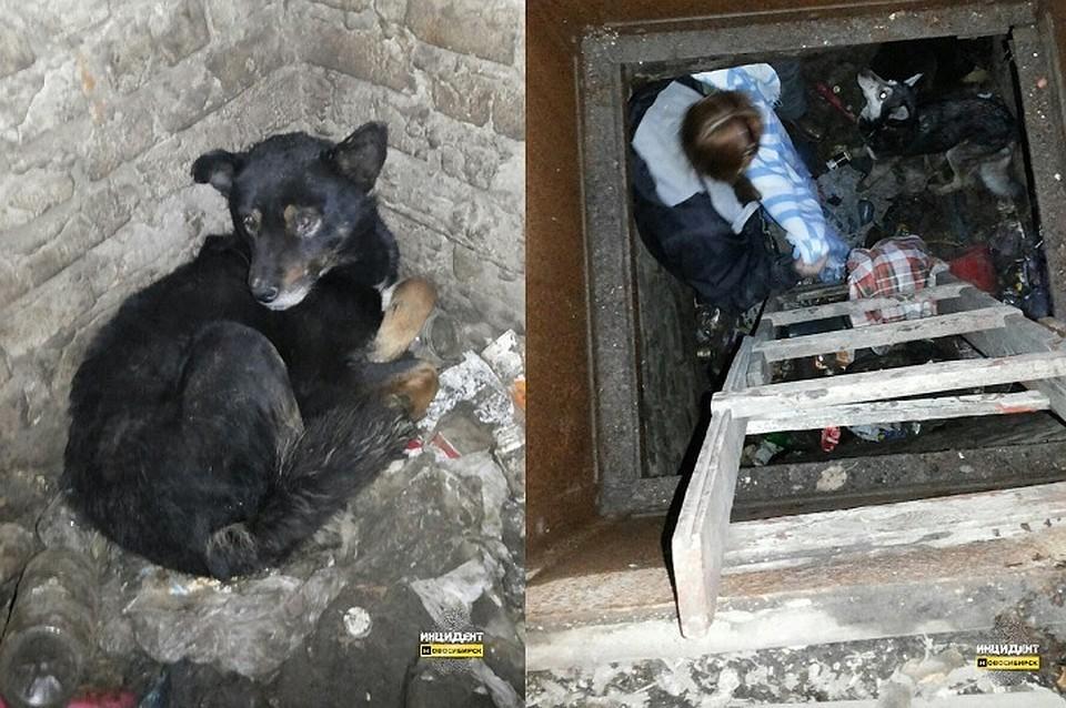 Новосибирские зоозащитницы вызволили истощенных собак из«погреба смерти»