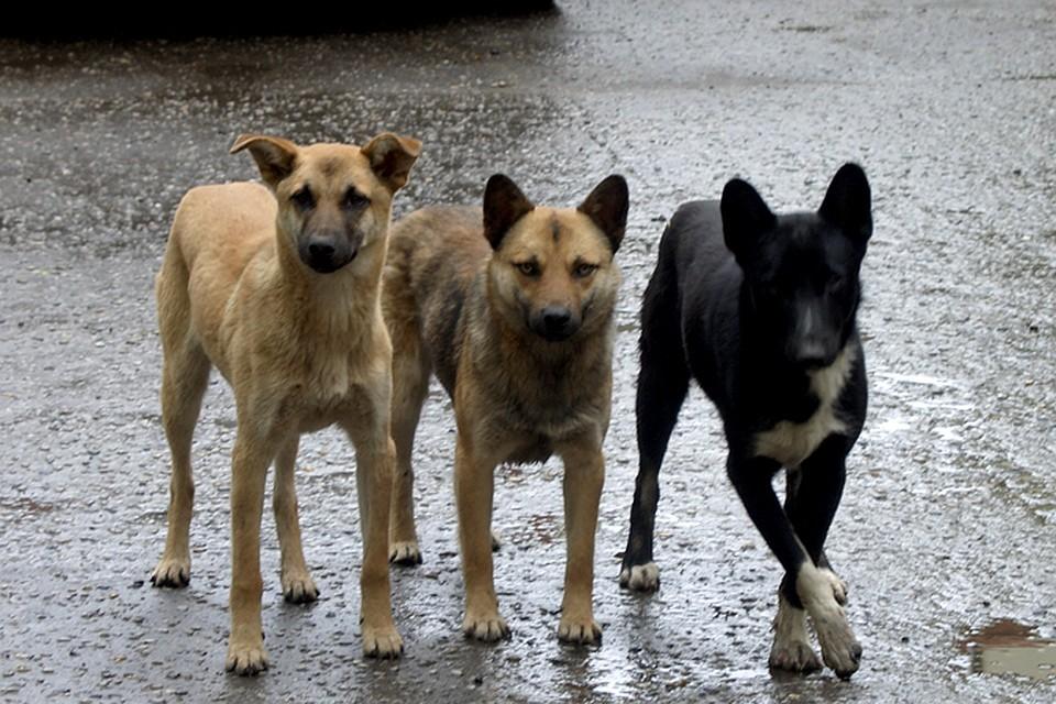 ВГорячем Ключе отыскали тринадцать мертвых собак иодну кошку