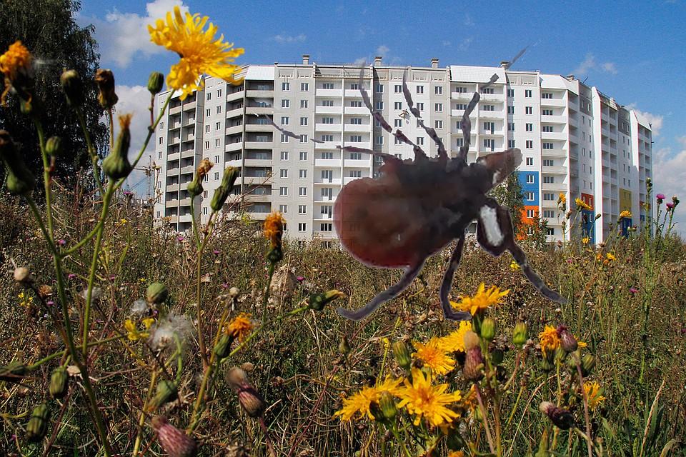 Парки ипляжи Челябинска начнут обрабатывать отклещей с27апреля