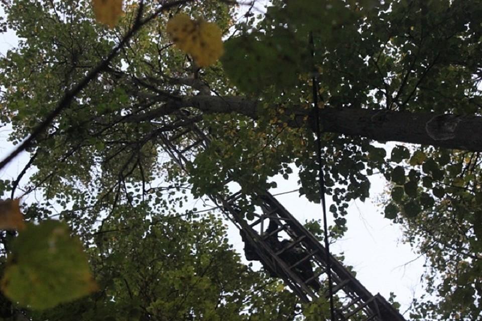 ВКазани возбуждено уголовное дело после падения дерева на14-летнюю девочку
