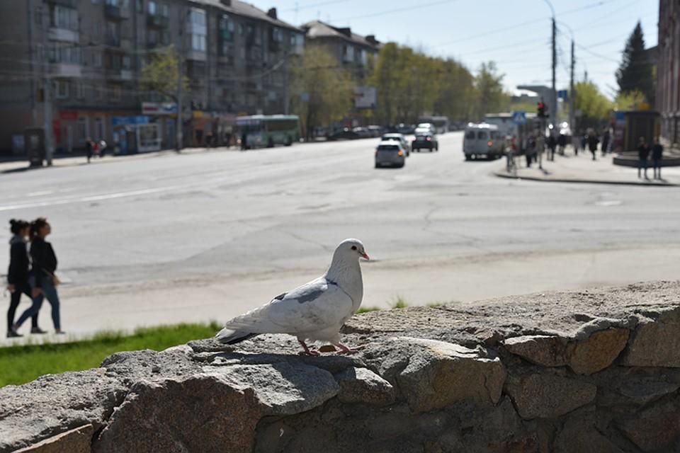 Синоптики прогнозируют выпадение снега вНовосибирске вконце сентября