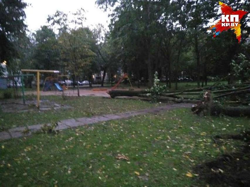Ветер повалил остановку налюдей вМинске— 3 человека пострадали