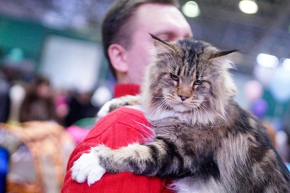 Специалисты назвали самые реализуемые породы кошек вНижегородской области
