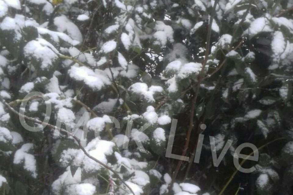 Граждане Омска опубликовали вглобальной паутине первые фотографии свежего снега