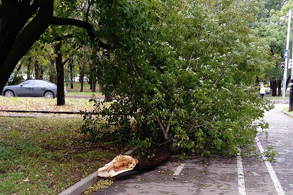 ВХабаровском крае неменее 6-ти тыс граждан остались без света из-за циклона