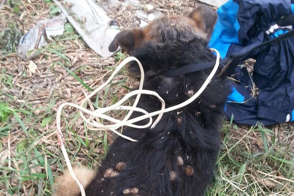 ВБарнауле мужчина попытался повесить свою собаку набытовом проводе