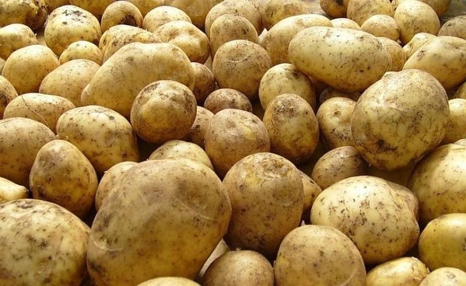 ВТатарстане генпрокуратура внесла представление из-за сборов картошки водной изшкол