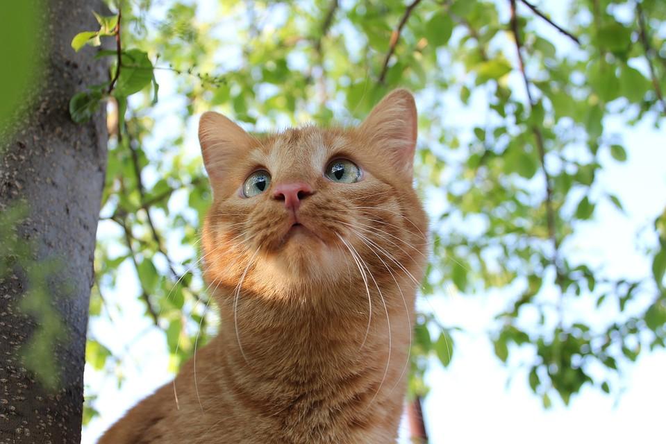 Программист запустил наYouTube реалити-шоу сосвоим котом