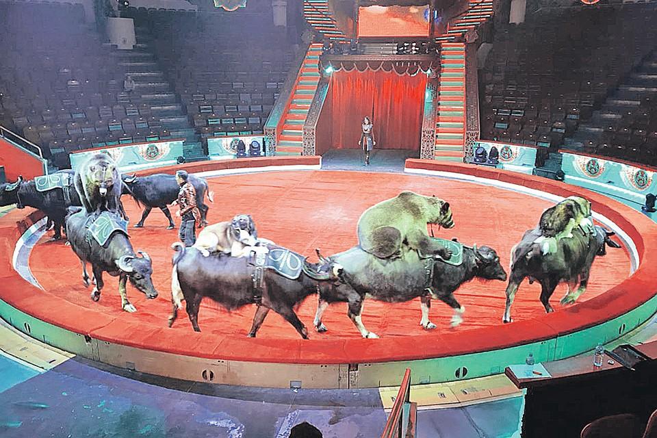 Цирк на цветном бульваре на новый год цены