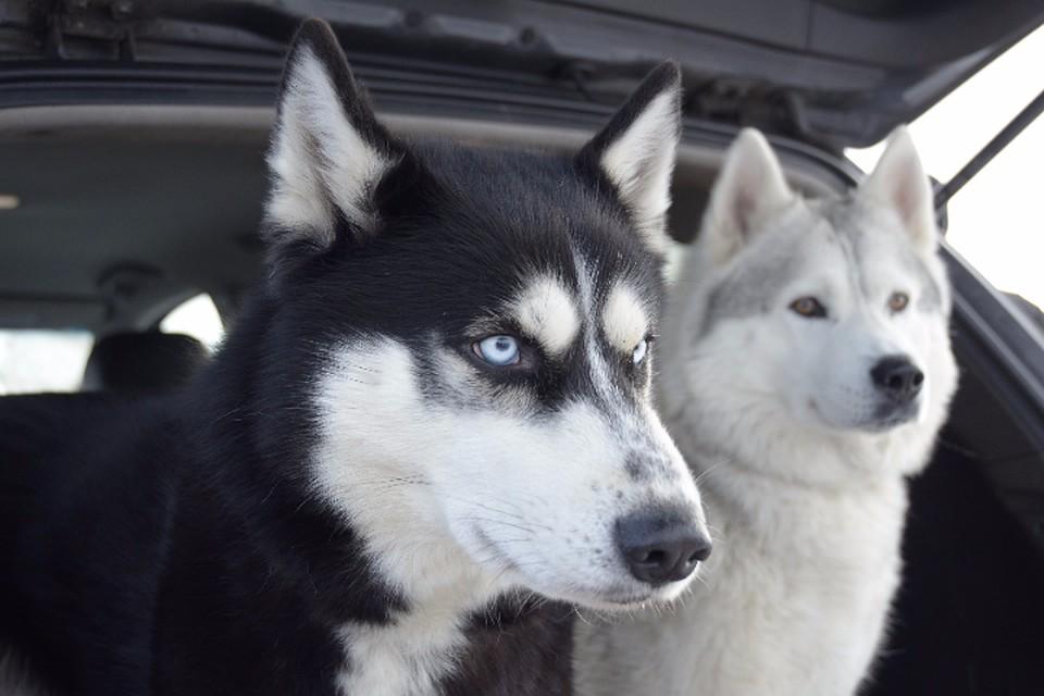 ВХабаровске собаки напали нагодовалого ребенка