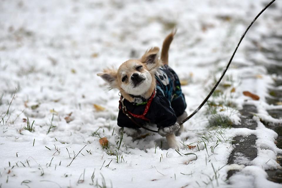 Ввоскресенье вПсковской области предполагается мокрый снег идождь