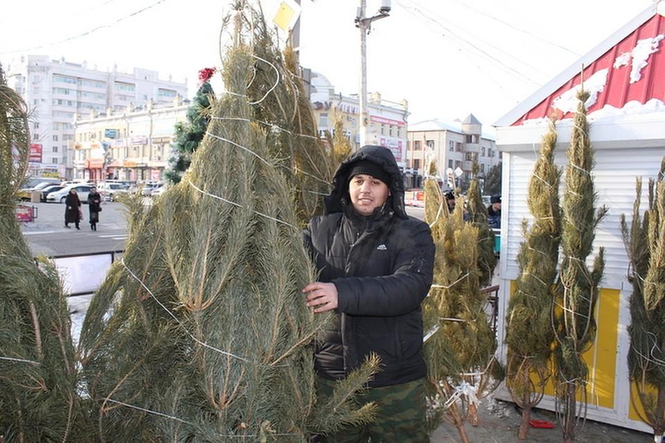 ВПриамурье срубят неменее 15 тыс. елок для Нового года