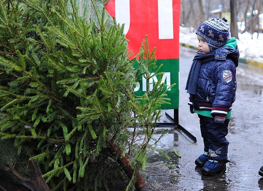 Пункты утилизации новогодних елок будут работать в столицеРФ с9января