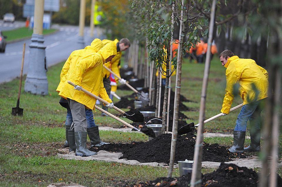 В 2018г. вПетербурге высадят 11 тыс. деревьев