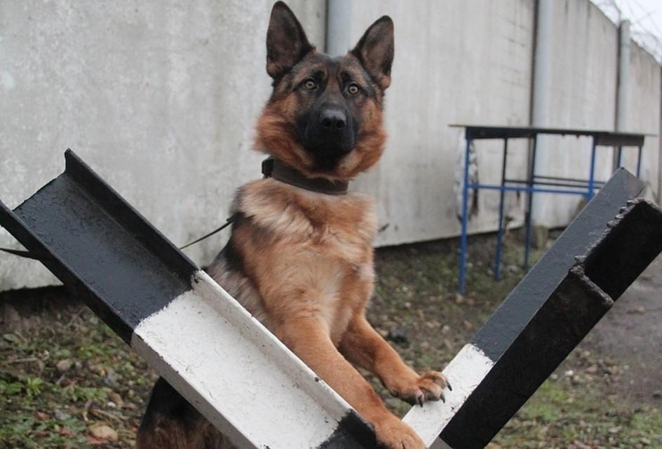 Avito назвал самые известные породы собак в 2017г.