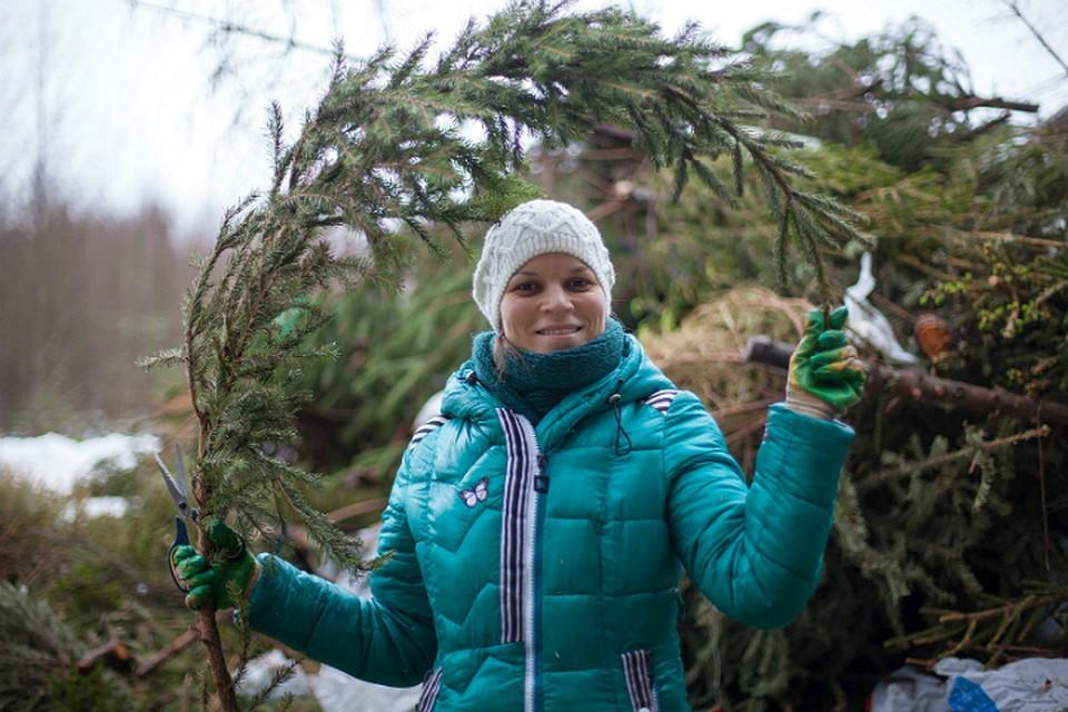 ВПетербурге откроют 14 точек поприему новогодних елок