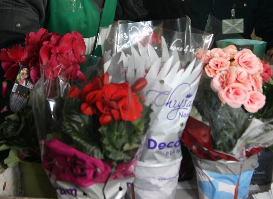 ВКалининград перед 8Марта ввезли тонны цветов