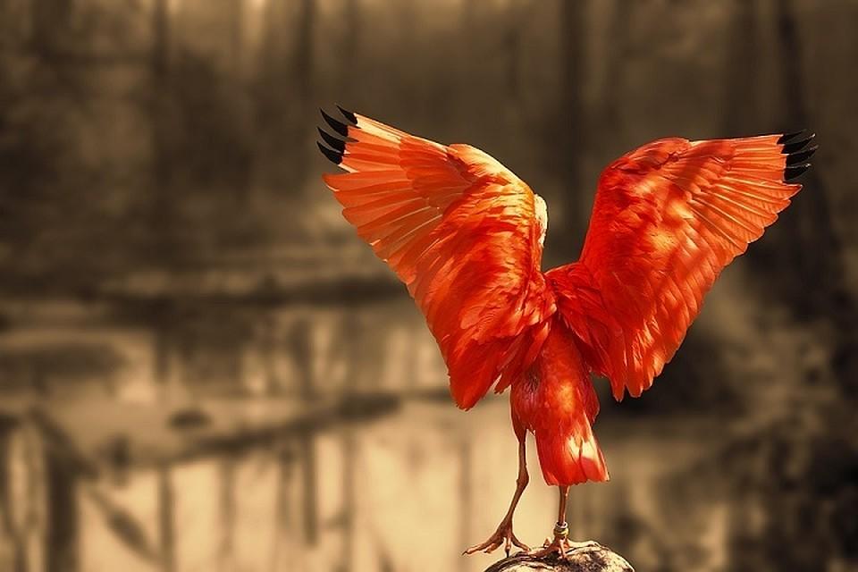 Наголову ведущей впрямом эфире приземлилась птица