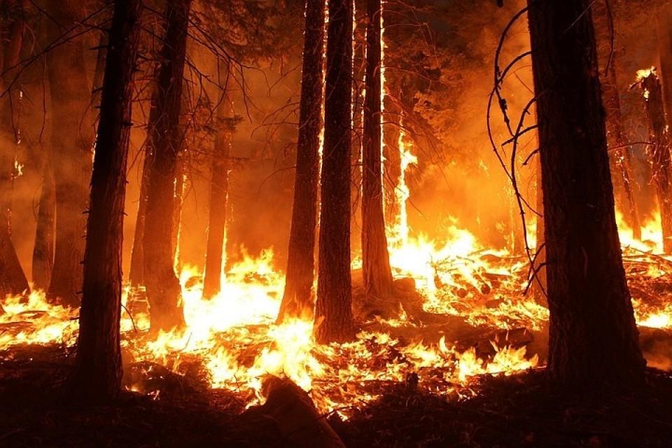 Два больших лесных пожара гасят вЮгре