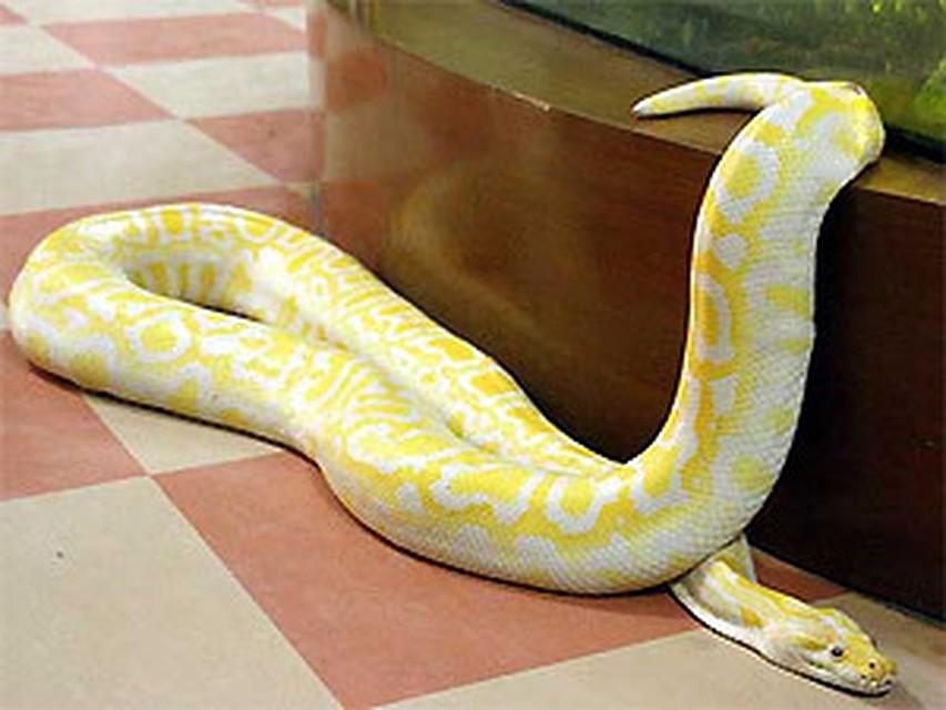 Как сделать домашний змей 668