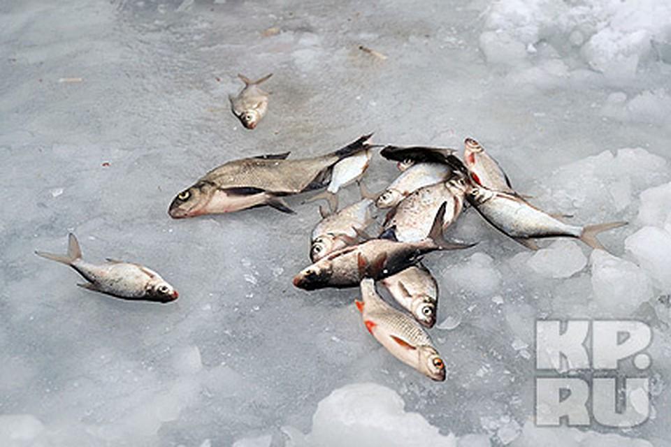 запрет ловли рыбы на плотинах