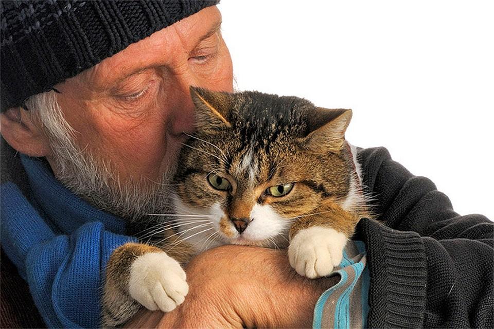 Котики снижают давление и продлевают жизнь мужчинам