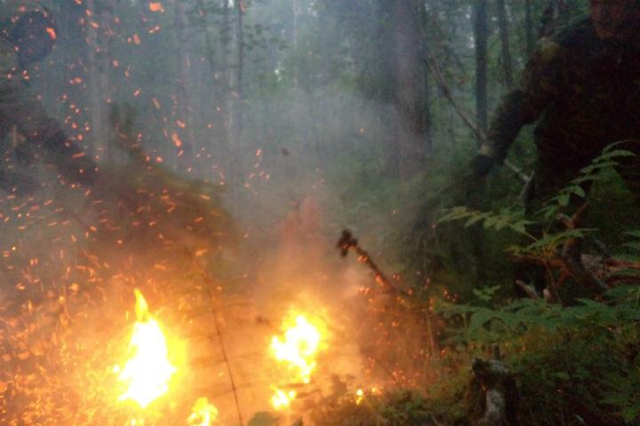 ВКрасноярском крае ситуация слесными пожарами под контролем