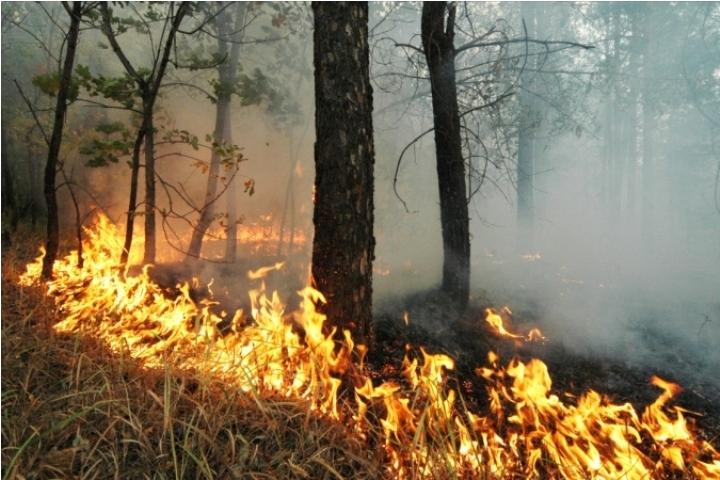 Число пожаров втомских лесах возросло в 1,5 раза засубботу