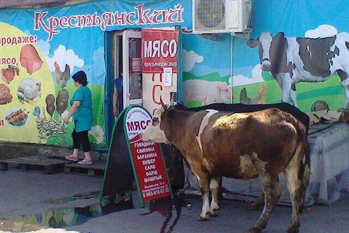 ВМеждуреченске вмясной магазин пришла корова