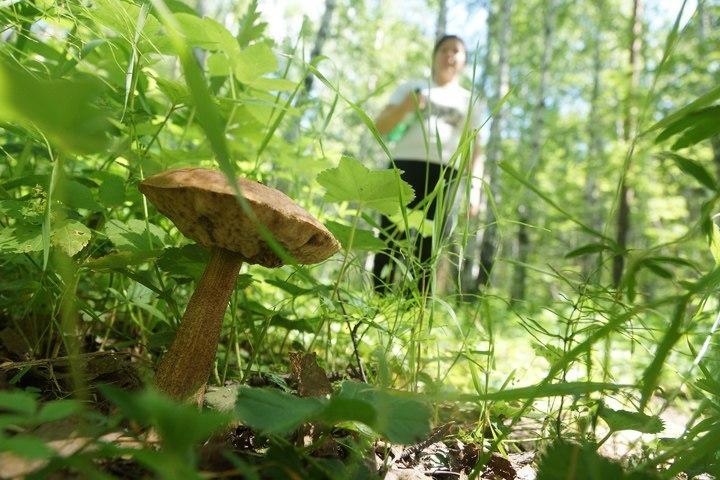 Пропавший грибник прошел неменее 100км прежде, чем сумел выбраться излеса