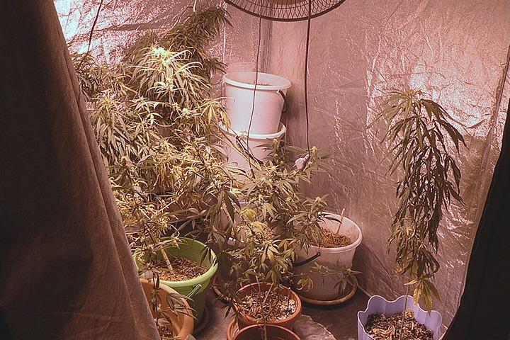 Кемеровские полицейские обнаружили лабораторию повыращиванию конопли