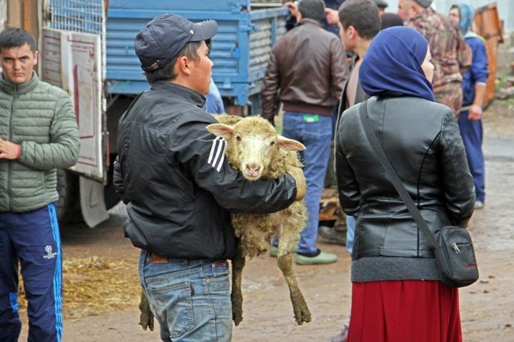 Мясо 2-х тыс. жертвенных баранов раздадут малоимущим ибольным