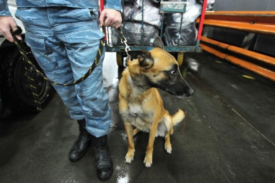 Бесхозный рюкзак проверяют впетербургском аэропорту «Пулково»
