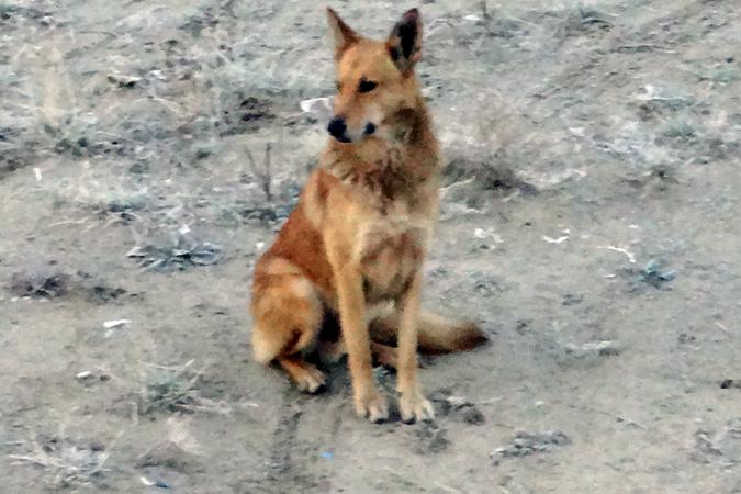 Жителям Салехарда будут платить запомощь вотлове бездомных собак