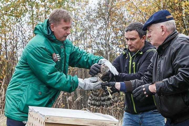 Руководитель Департамента природопользования Москвы Антон Кульбачевский лично выпустил на волю ястреба и черепах. Фото: Михаил Подобед