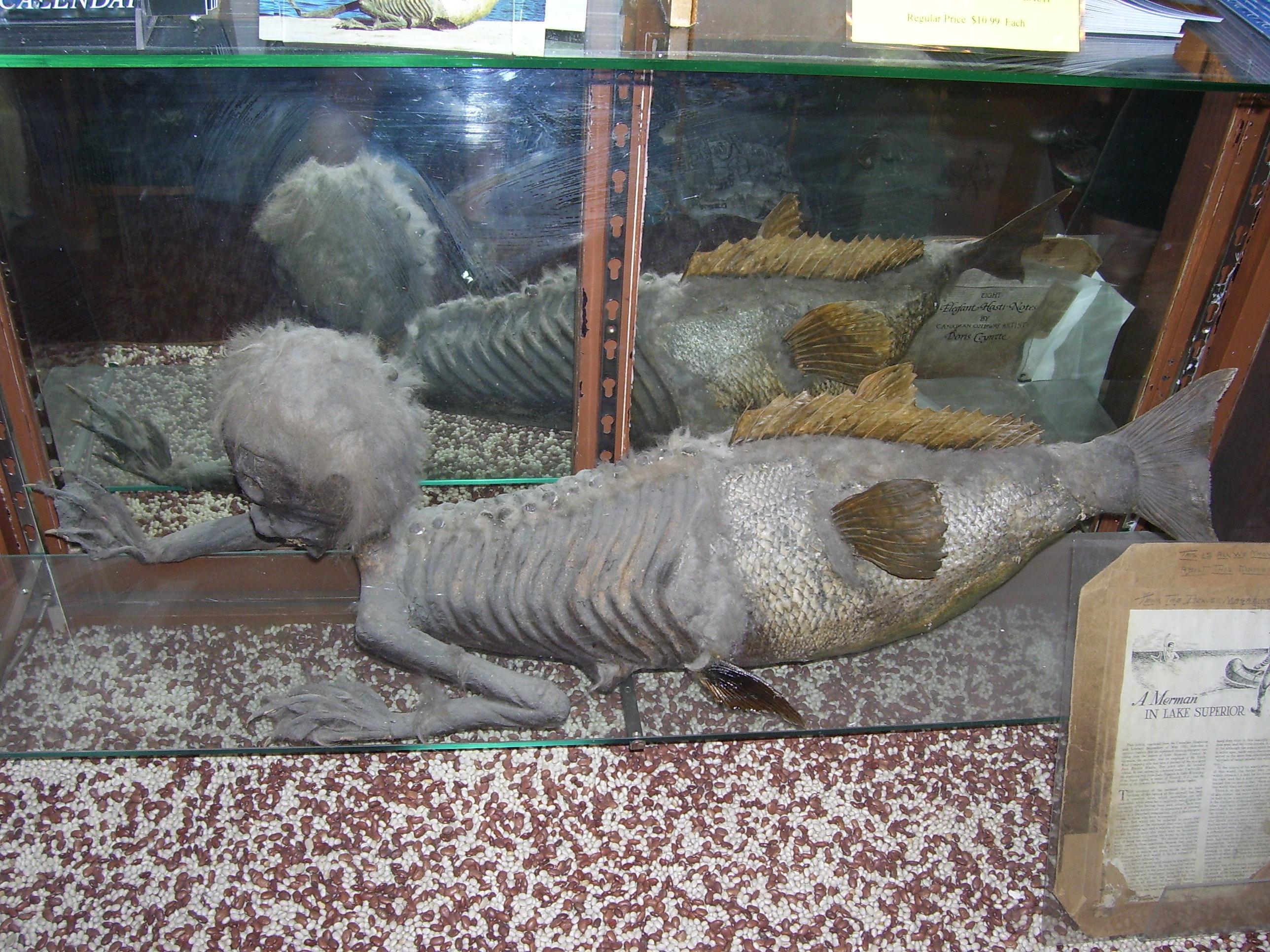 """Одна из известных мистификаций - так называемая """"Фиджийская русалка"""""""