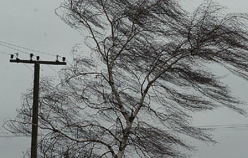 ВКраснодаре на14 дорогах ветер повалил деревья