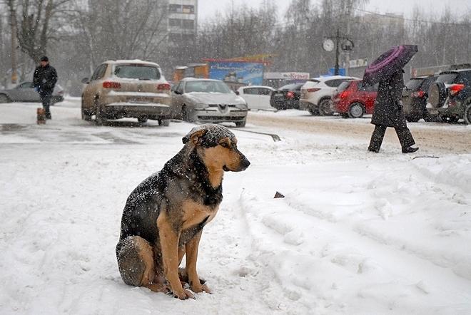 ВКузбассе квыходным предполагается похолодание иснежные метели