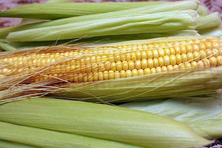 Партию больной кукурузы изЮАР непустили вПетербург