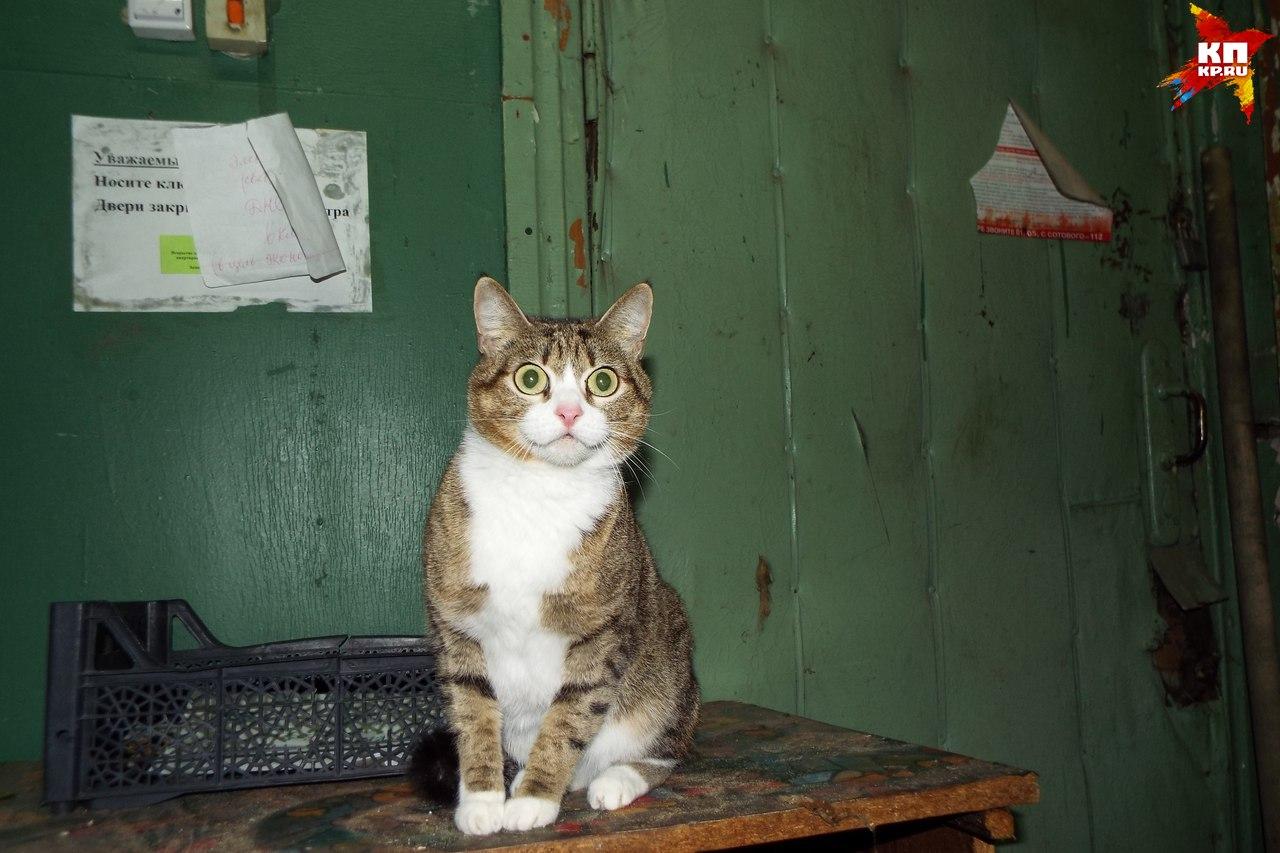 Кота хозяева нашли в старом бараке