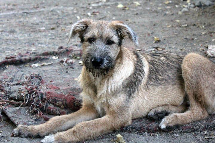 В приюте нашли свой дом около 80 собак. Фото: предоставлено приютом «Бумеранг добра»