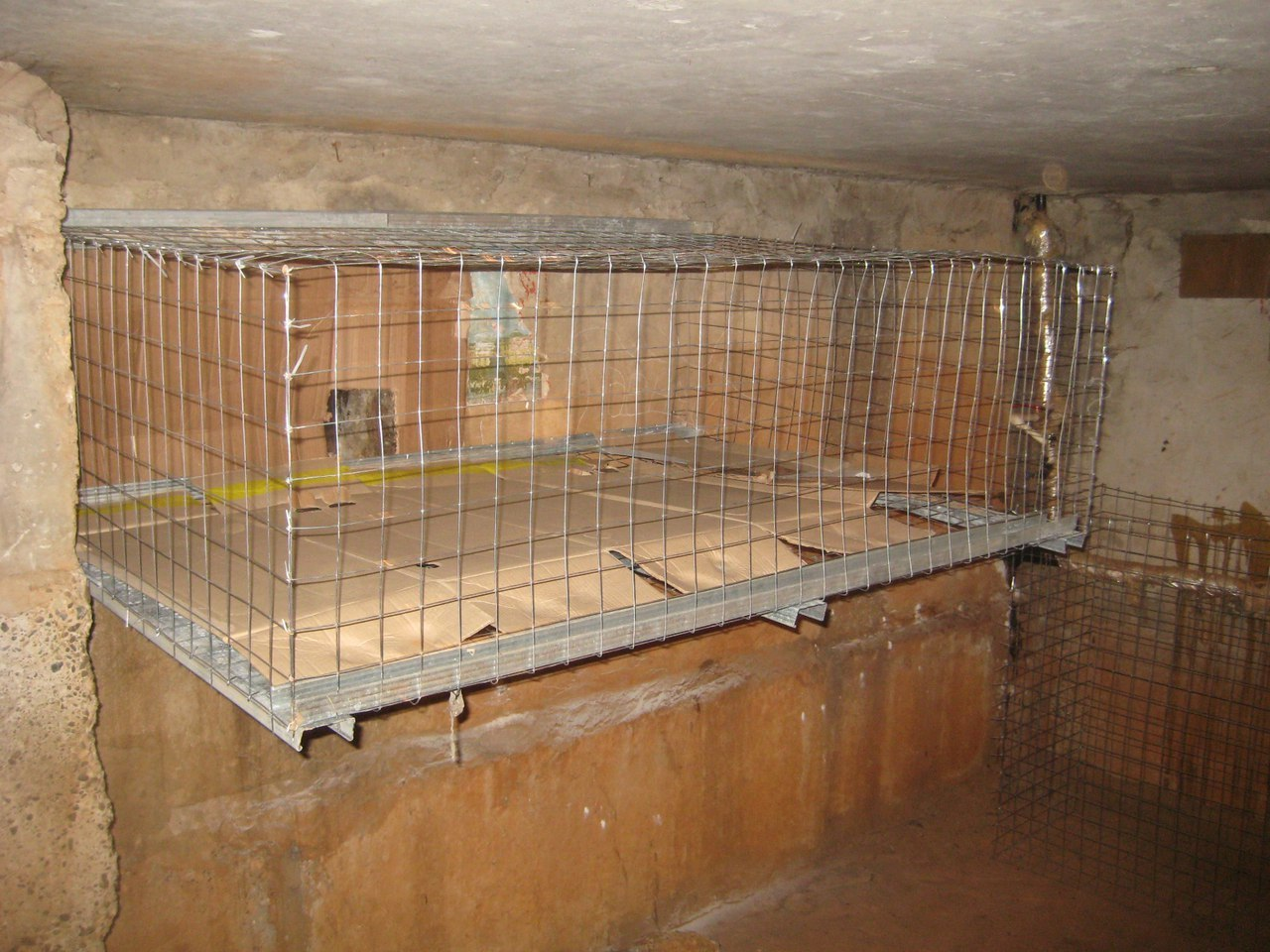 Челнинцы устанавливают вподвалах домов «обогреватели для кошек»