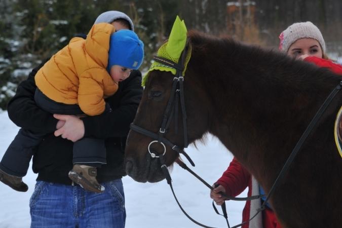 В Томской области раскрыли кражу коня.