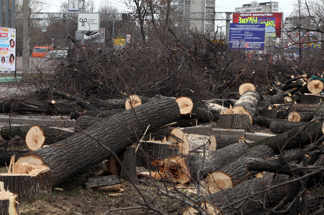 Общественники готовят обращение впрокуратуру пофакту незаконной вырубки сквера вЧелябинске
