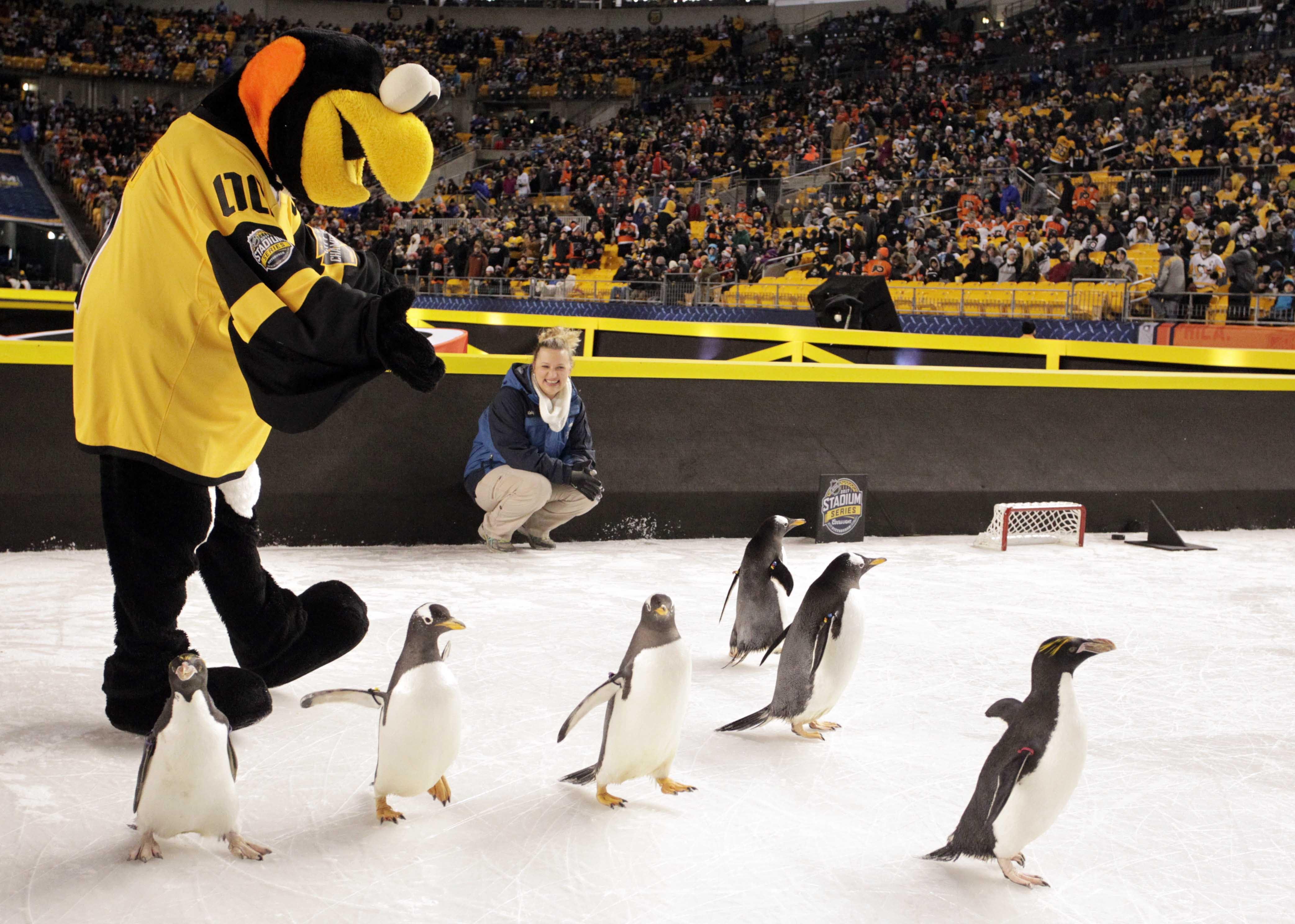 Перед матчем НХЛ налед вывели пингвинов