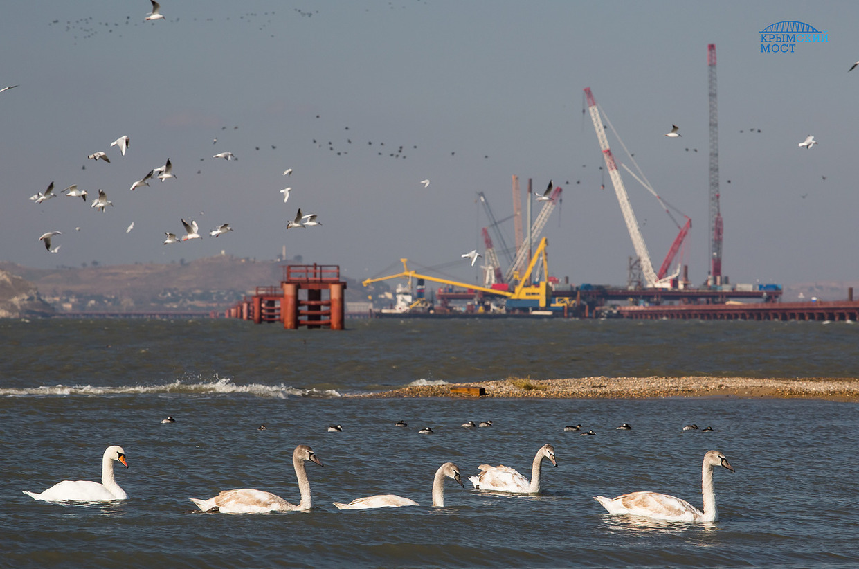 Врайоне стройки Керченского моста зафиксировано массовое скопление дельфинов