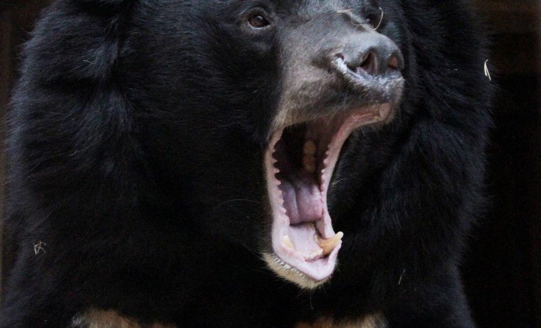 Взоопарке Екатеринбурга медведи вышли иззимней спячки